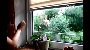 Dual Day And Night Roller Blinds Day And Night Blinds Zebra Blinds Youtube