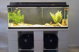 fish tank size u2013 the aquarium setup filtration and maintenance site