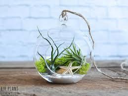 air plant terrariums fallcreekonline org