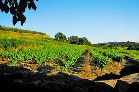 chambre d agriculture du roussillon le coing des vignes mauressargues gard languedoc roussillon