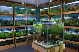 Aquascape Shop Aquarium Zen Photo Shoot U2014 Norse Creative