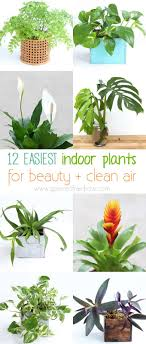 best house plants 12 easy air purifying indoor plants for beauty well being a