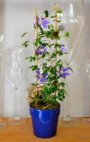 54 best lovely trellis for climbing plants u0026 flowers images on