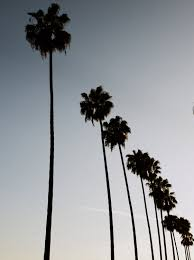 Los Angeles Home Decor Los Angeles Photography Hollywood Palm Trees L A Photograph