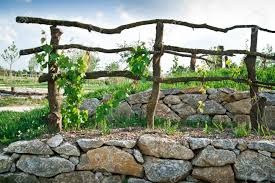 wooden grapevine trellis on terrace of stones stock photo picture