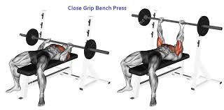 Bench Press Program Chart Exercising Close Grip Barbell Bench Press Target Muscles Marked