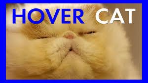 Persian Cat Meme - cat prepares to hover over living room in literal interpretation