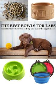best dog bowls choosing the right bowl for your lab the
