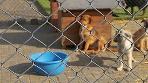 Seeking Pitbull Pitbull Pit Bull Puppy Sad In Animal Shelter Homeless