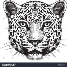 black white vector sketch leopards face stock vector 168267392