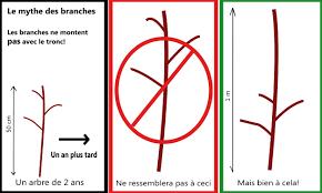 comment fabriquer un arbre a chat tailler un arbre fruitier au québec pommier standard et poirier
