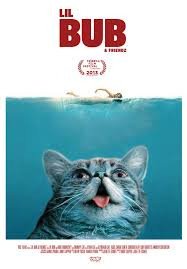 Lil Bub Meme - image 514947 lil bub know your meme