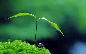 green plants green plants wallpaper 22829