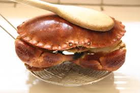 cuisiner un tourteau recette cuire et décortiquer un tourteau crabe cuisinez cuire et