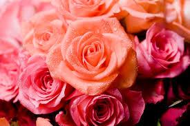 flower petals how to save flower petals hunker