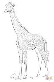 masai giraffe coloring free printable coloring pages