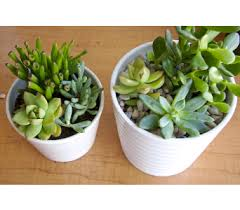 Plant Delivery Plants Delivery Victoria Bc Jennings Florists