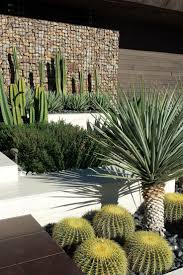 exciting cactus landscaping ideas 17 on simple design decor with