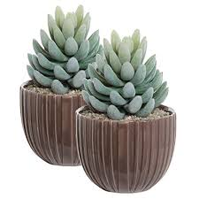 best 23 succulent containers