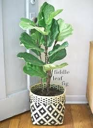 Indoor Planter Pots by Indoor House Plant Pots Decorative Indoor Plant Pots Uk Black