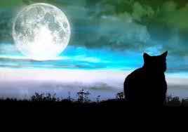 sligo today for sligo county the cat and the moon winner