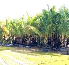30 best homestead wholesale tree nursery and garden center images