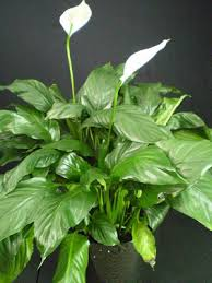 funeral plants plants are the strangest funeral plants part ii for the