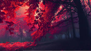 beautiful hd wallpaper forest savin it