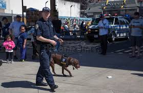 counter terrorism bureau nypd counter terrorism bureau k 9 during opening day ya