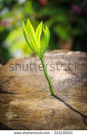 new tree growth on dead tree stock photo 223139587