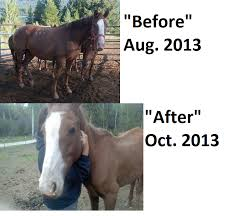 black mustang ranch starving rescuers in idaho bonny black