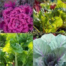 edible foliage