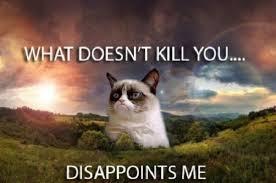 Frown Cat Meme - 45 best funny grumpy cat memes the viraler