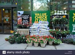 whole foods thanksgiving hours open plants and mulch for sale at whole foods market in manhattan stock