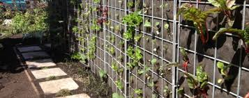 vertical vegetable gardening in wall vertical vegetable