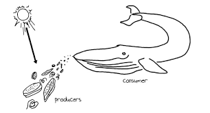 predation u0026 herbivory article ecology khan academy