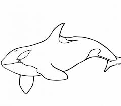 jonah coloring page killer whale coloring pages best coloring pages adresebitkisel com
