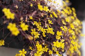 free photo yellow flower garden free image on pixabay 878893