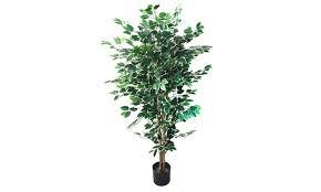 garden 5 foot ficus artificial tree groupon