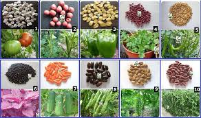seeds hybrid vegetable seed kit 1 for kitchen terrace poly house gardening 10 items in garden outdoors