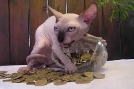 Meme Coins - meme battle naked cat hoarding coins meme battles