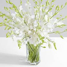 white dendrobium orchids deluxe white dendrobium orchids