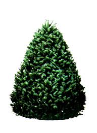 how many lights for a 7ft christmas tree captivating 7 ft christmas tree 7ft pre lit uk argos b q asda how
