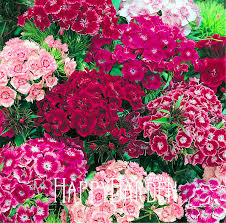 flowers in bulk popular fresh flowers bulk buy cheap fresh flowers bulk lots from