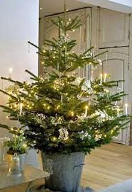 live christmas trees planning on a live christmas tree home garden daily journal