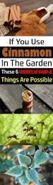 native plant fertiliser best 25 fertilizer for plants ideas on pinterest organic