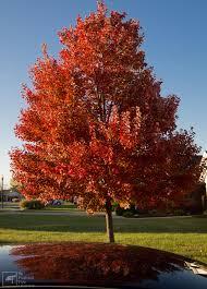 fall tree jpg 2901 4032 rendering