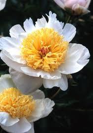 471 best grow perennials images on pinterest garden plants