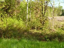 Houses For Sale In Cottage Grove Oregon by Cottage Grove Or Foreclosures U0026 Foreclosed Homes For Sale