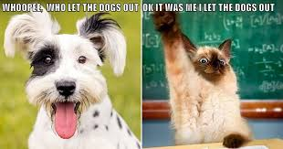 Who Let The Dogs Out Meme - whoopee who let the dogs out lolcats lol cat memes funny